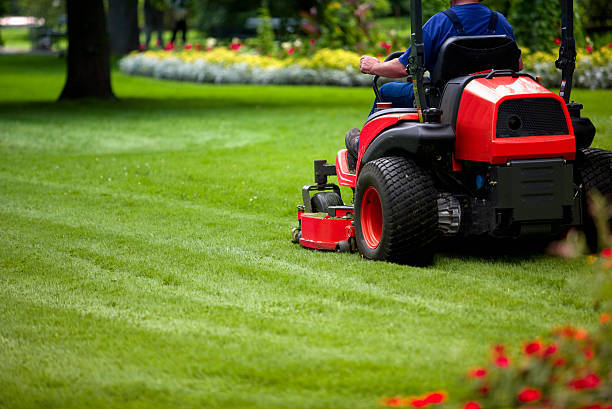 Benefits of Professional Services for the Taking Care Of Your Lawn